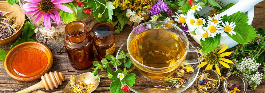 Medicinal Herbs You Need to Know About!