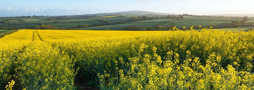The Father of the Modern Brassica: Dr. Jack Brown and his Mighty Mustard® Cover Crop