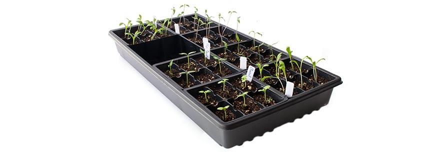 5 Tips for Growing Your Vegetable Starts Indoors