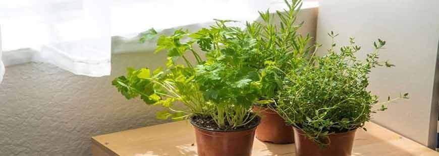 The Year-Round Herb Garden