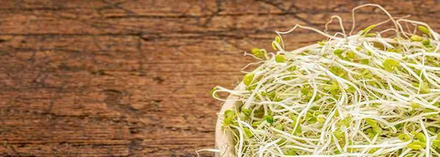 Why Use Sprouts for Emergency Food Storage?