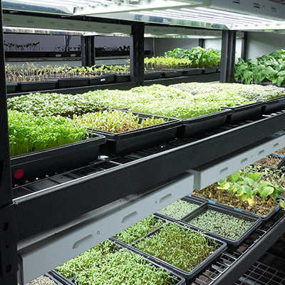 Microgreens Trials
