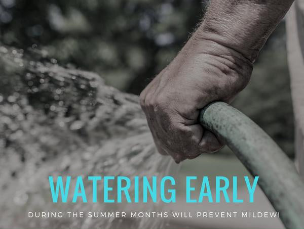 Water Early Sustainable Seed