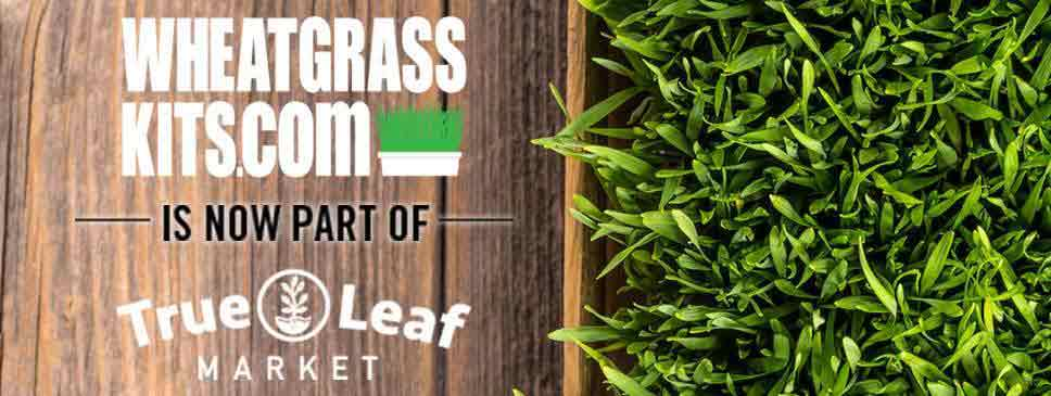 Wheatgrass kits is now part of True Leaf Market