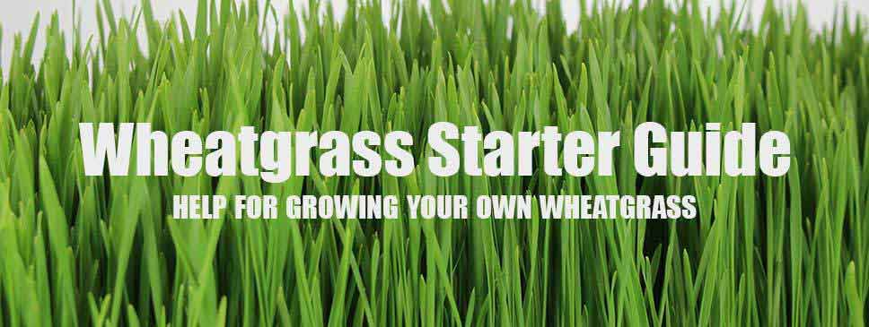 Wheatgrass Kits Starter Guide