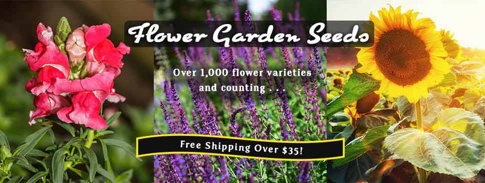 Mountain Valley Seeds Vegetable Garden Seeds