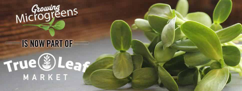 Growing Microgreens is now part of True Leaf Market