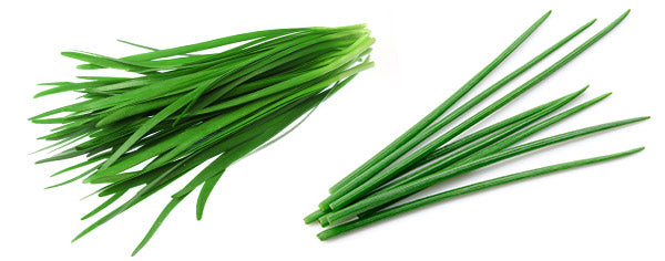 Garlic Chives versus Chives