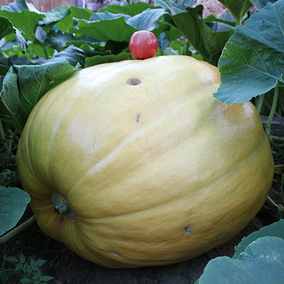 Giant Pumpkin Growing class
