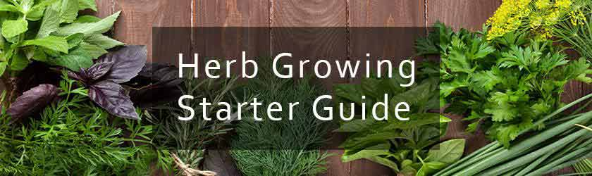 Herb Kits Started Guide