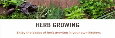 growing fresh herbs starter guide