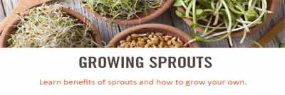 sprouting starter guide