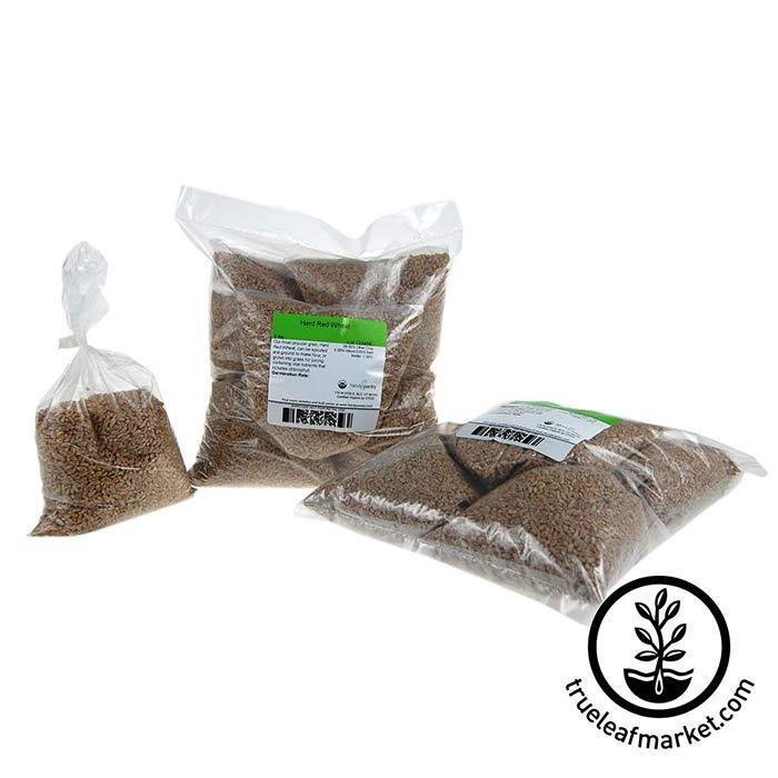 Wheat Seed (for Wheatgrass): Hard Red - Organic 10 lb