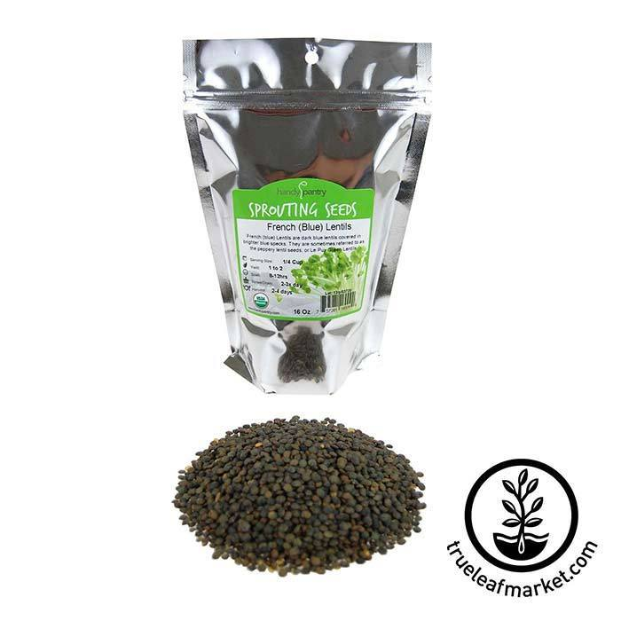 Lentils - French Blue Sprouting Seed - Organic 1 lb