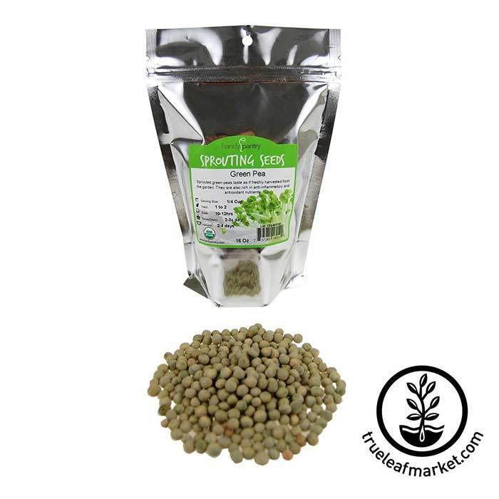 Green Pea Sprouting Seed - Organic 1 lb