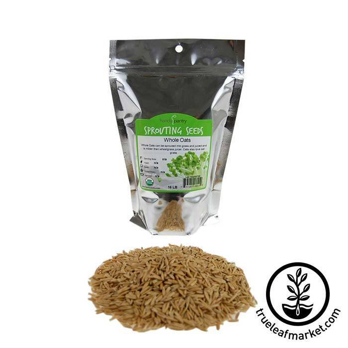 Oats: Whole Oat Grain seeds - Organic 1 lb