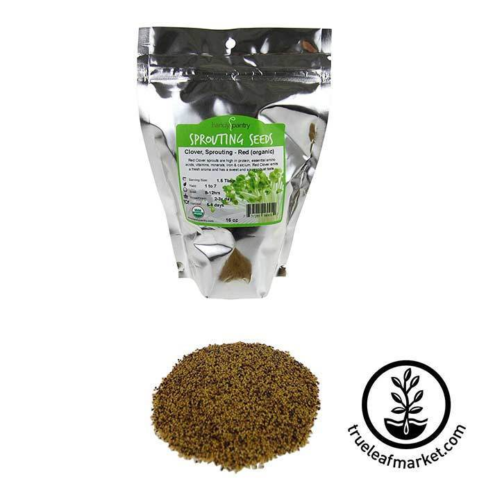 Clover: Red - Organic Seeds 1 lb