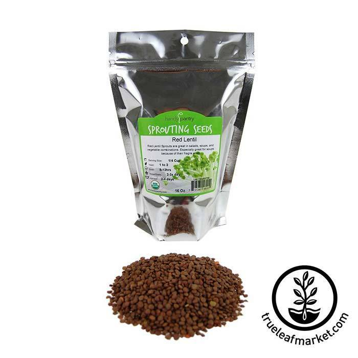 Lentils - Red Sprouting Seed - Organic 1 lb
