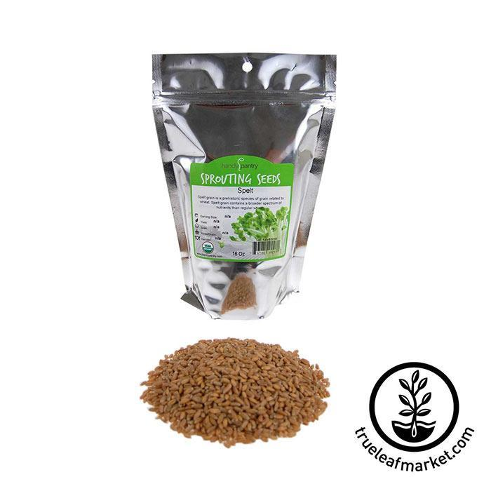 Spelt Grain Sprouting Seeds - Organic 1 lb