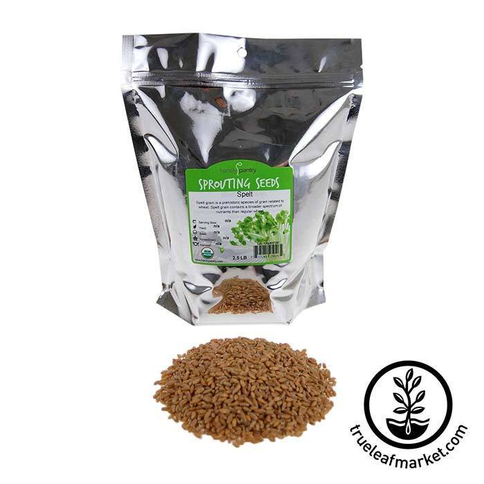 Spelt Grain Sprouting Seeds - Organic 2.5 lb