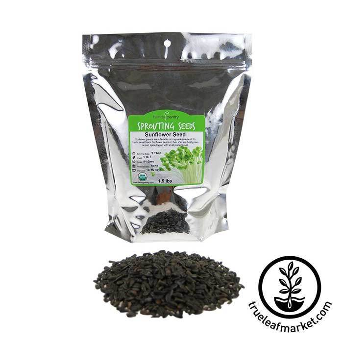 Sunflower Seeds: In Shell Black - Organic 1.5 lb