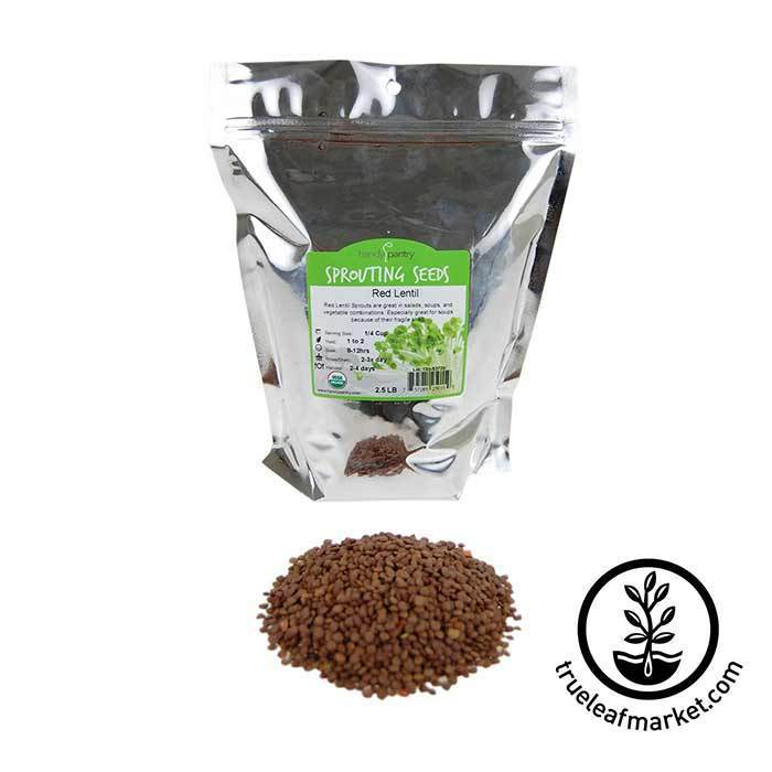 Lentils - Red Sprouting Seed - Organic 2.5 lb