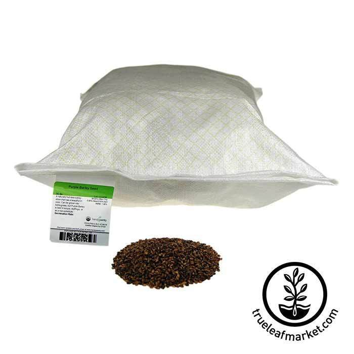 Barley Seed Purple: Organic - No Hull 50 lb