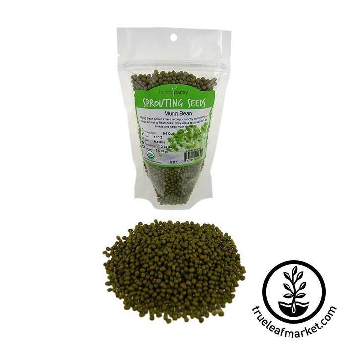 Mung Bean Sprouting Seed - Organic 8 oz