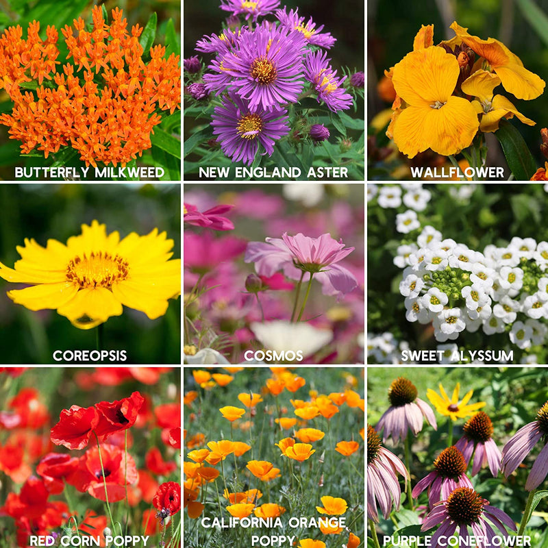 Wildflower Seeds - Save the Bees