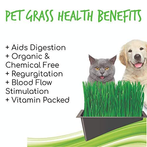 Pet Grass Benefits