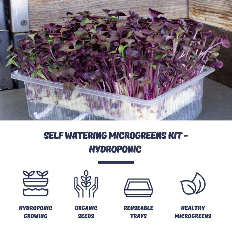 Microgreens Benefits