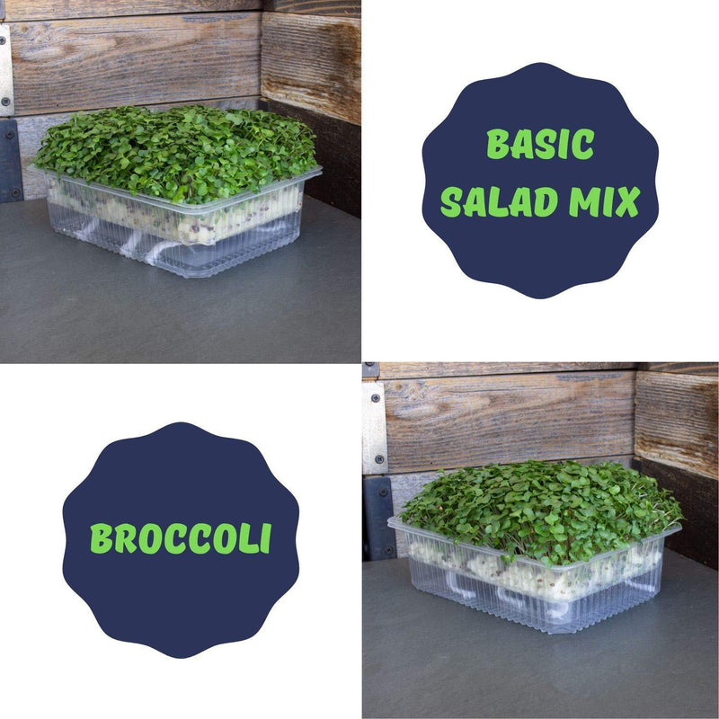 Basic Salad Mix & Broccoli Micro Greens