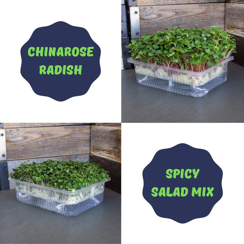 Spicy Salad Mix & Radish Microgreens