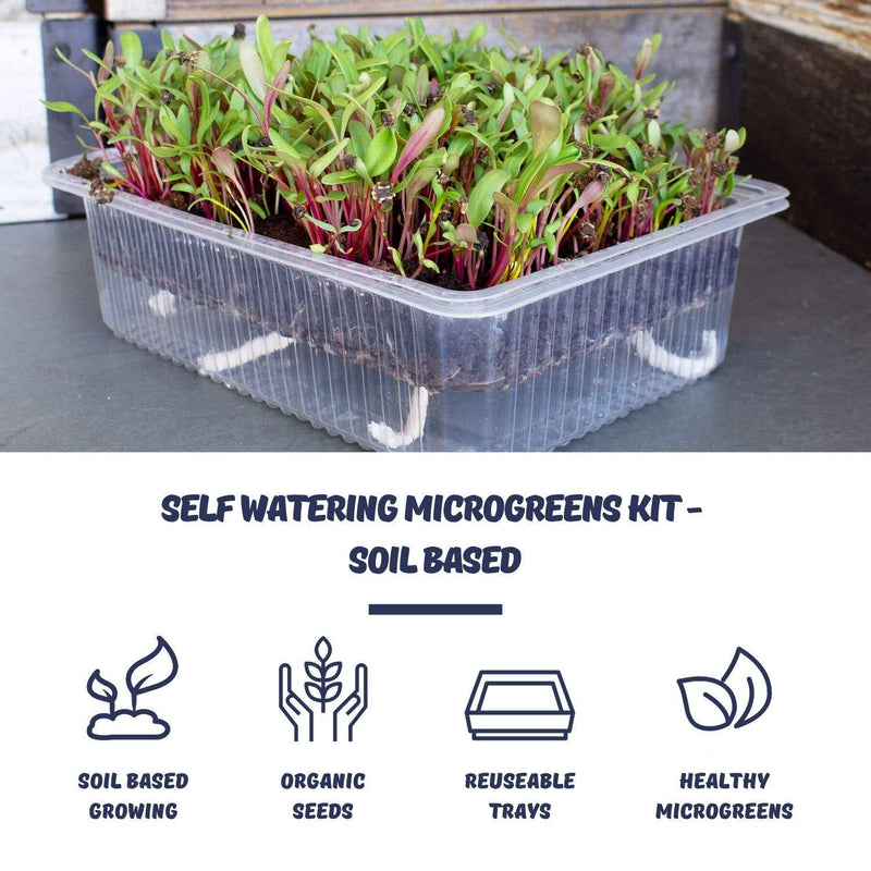 Soil Microgreens Benefits