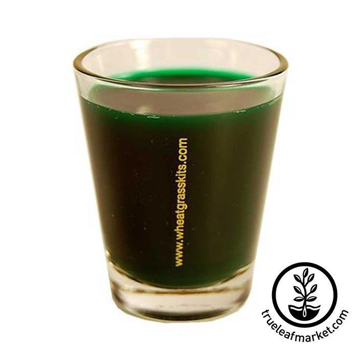 Wheatgrass shot glass - Full of Wheatgrass Juice