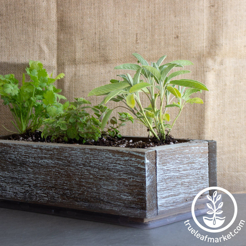 Barnwood Planter Organic Culinary Herb Garden Kit aged grown