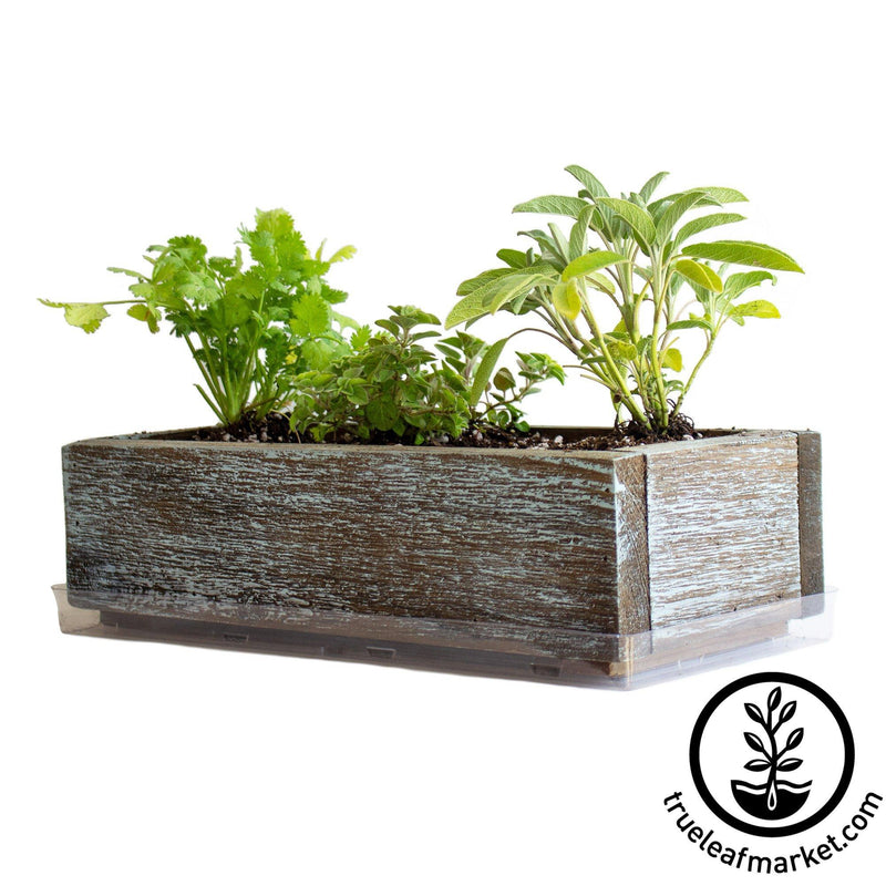 Barnwood Planter Organic Culinary Herb Garden Kit aged white background