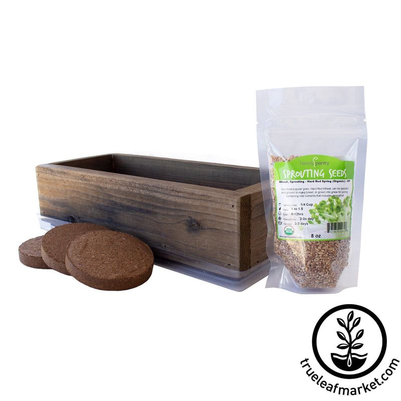 Organic wheatgrass kit brown expanded white background