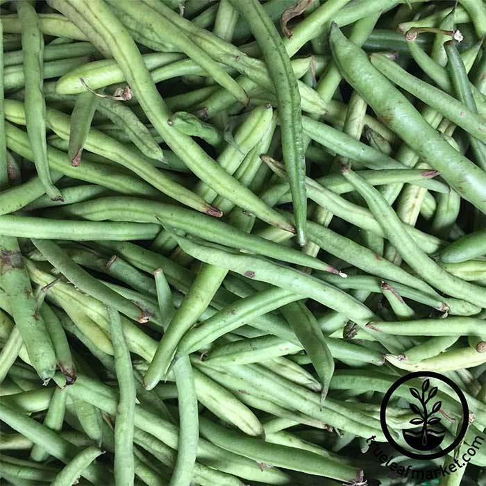 Bean - Pole - Kentucky Blue Garden Seeds