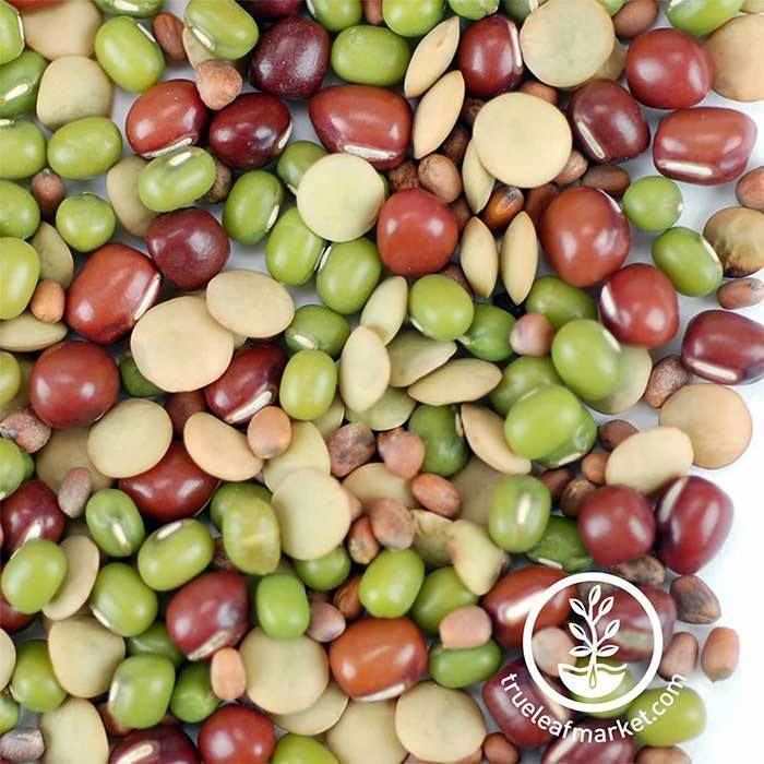 Non-GMO Organic Bean Salad Sprouts Mix