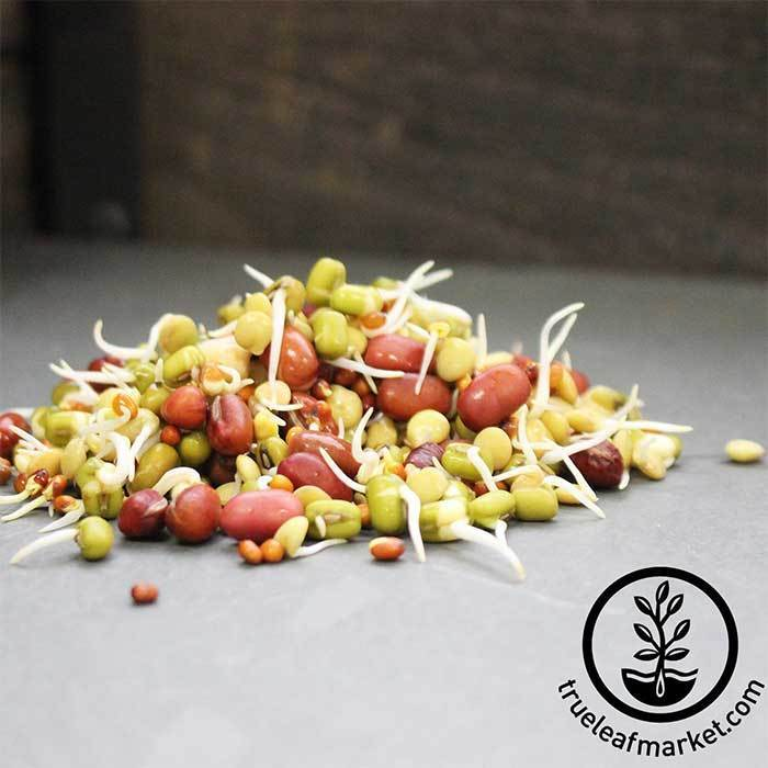Sprouting Kits & Supplies | Sprouters & Non-GMO, Organic Seeds