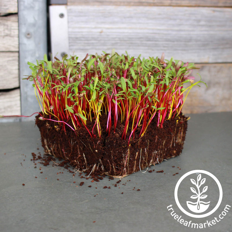 Detroit Beet Mix Microgreens Seeds