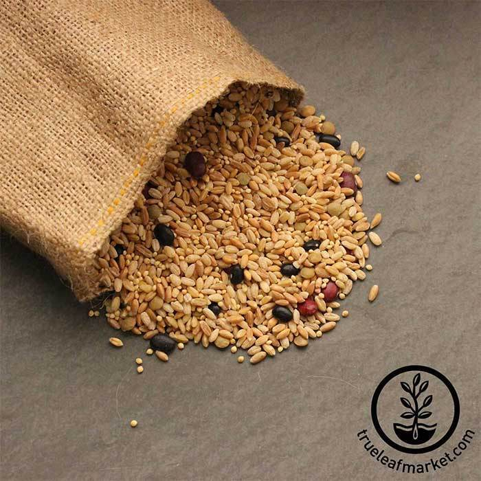 Biblical Bread Grain Mix (organic) - Bulk Grains & Foods