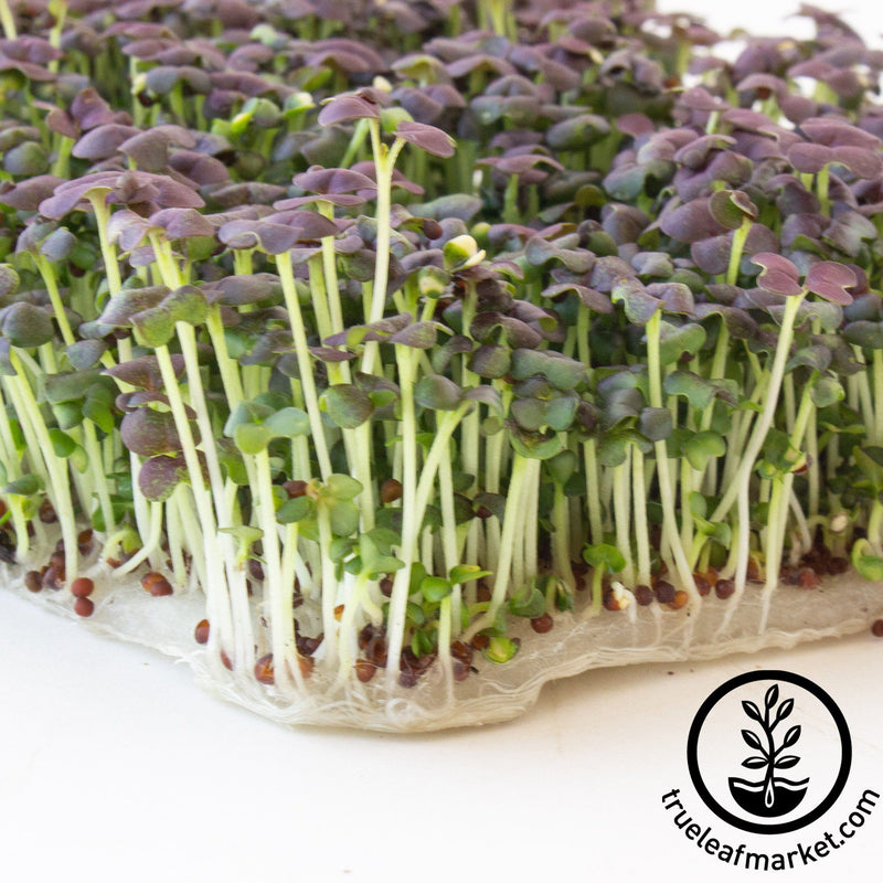 Biostrate - Felt Hydroponic Growing Pads
