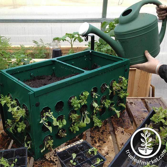 Planter Box -Grow Vegetables