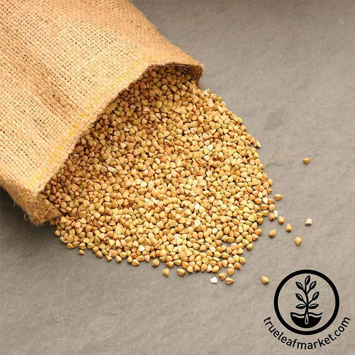 Buckwheat Groats (organic) - Bulk Grains & Foods