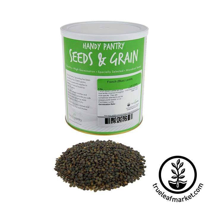 Lentils - French Blue Sprouting Seed - Organic 5 lb