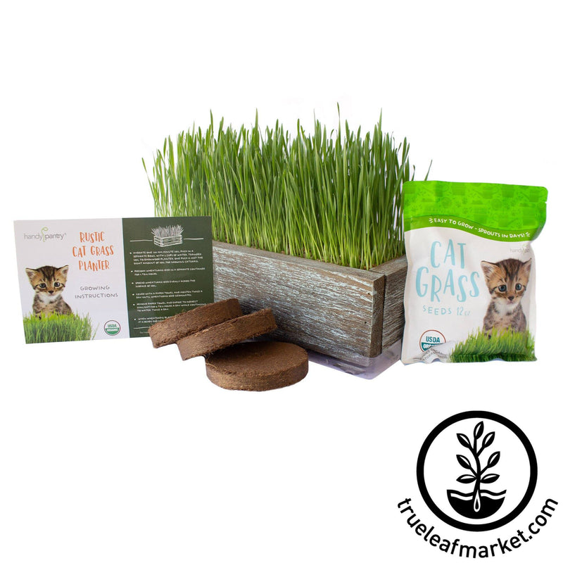 cat grass barnwood kit aged white background