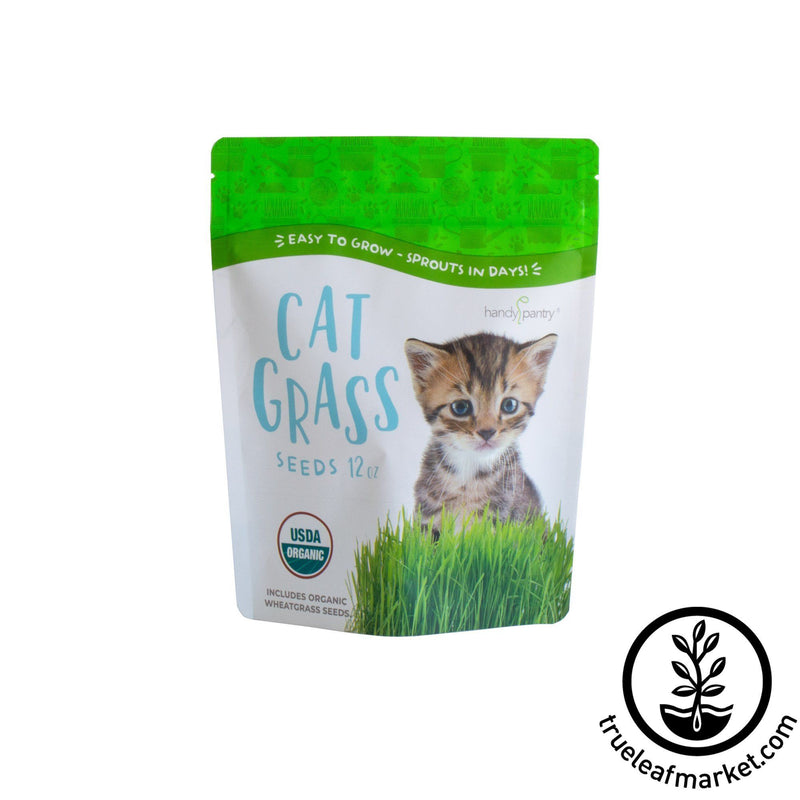 cat grass wheat seeds white background