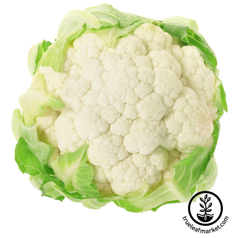 Cauliflower Igloo Garden Seeds